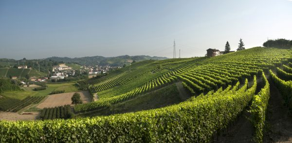 Srü vineyard
