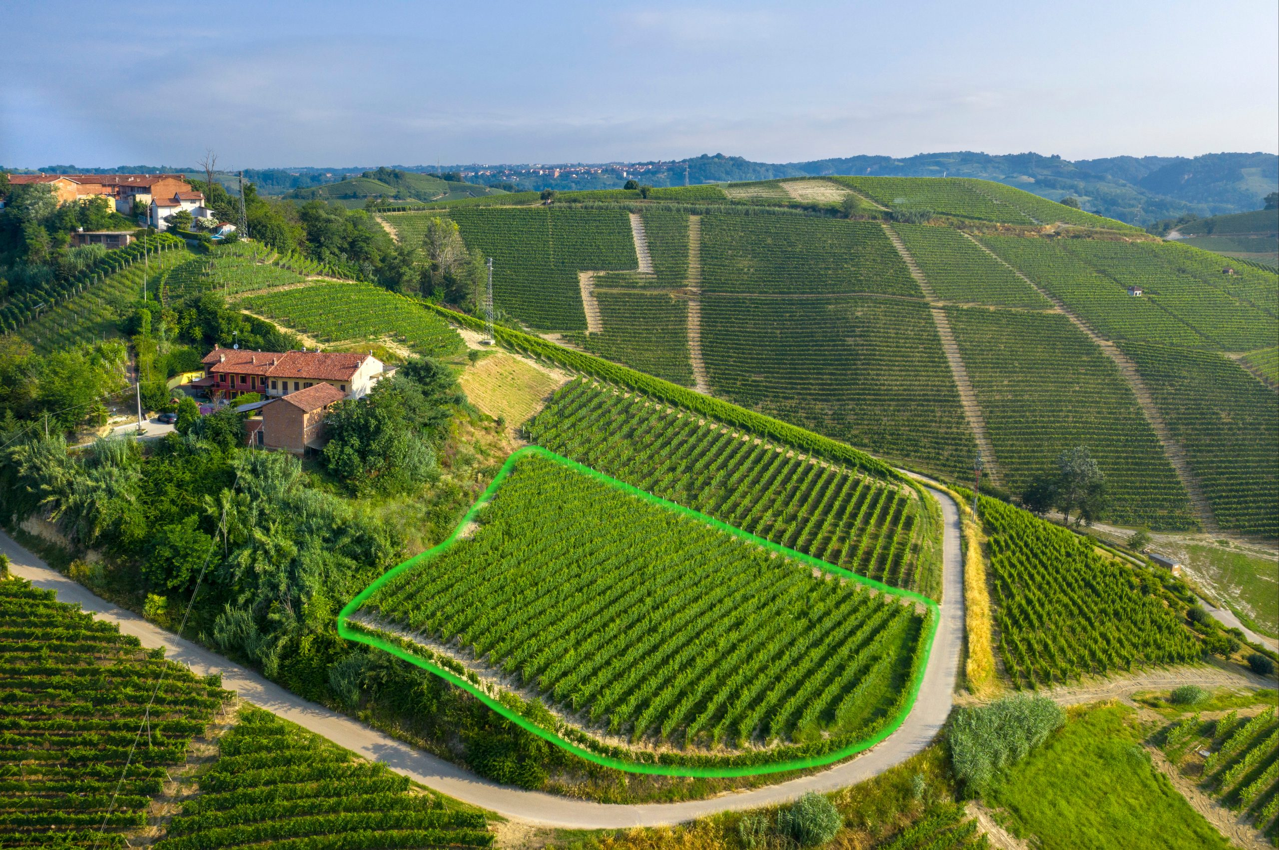 Highlighted S.S. Trinità vineyard