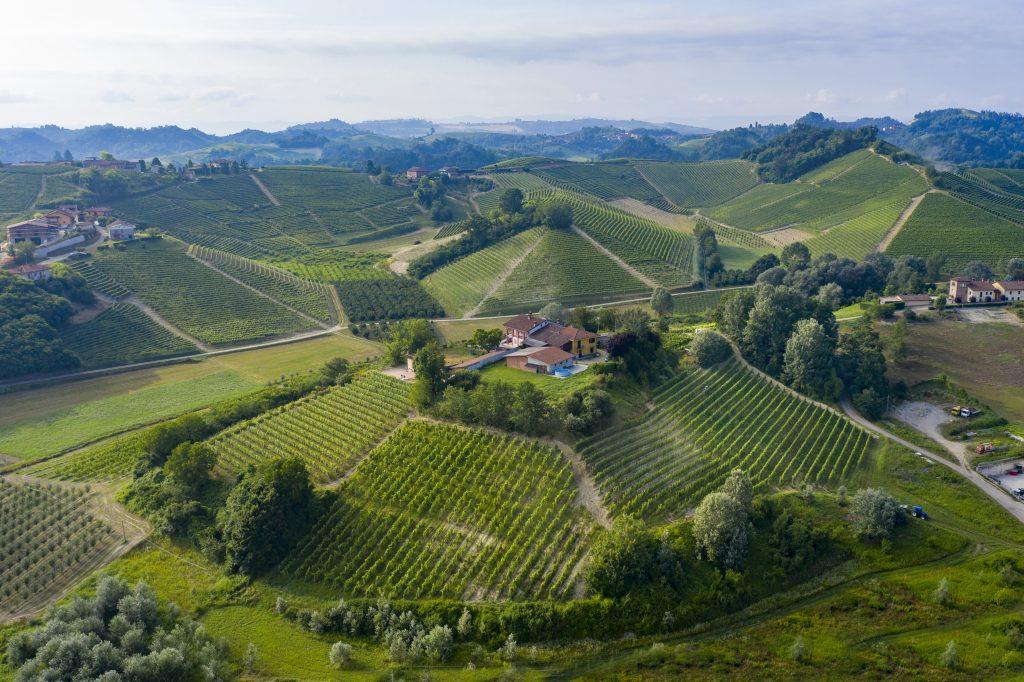 Serra Lupini vineyard