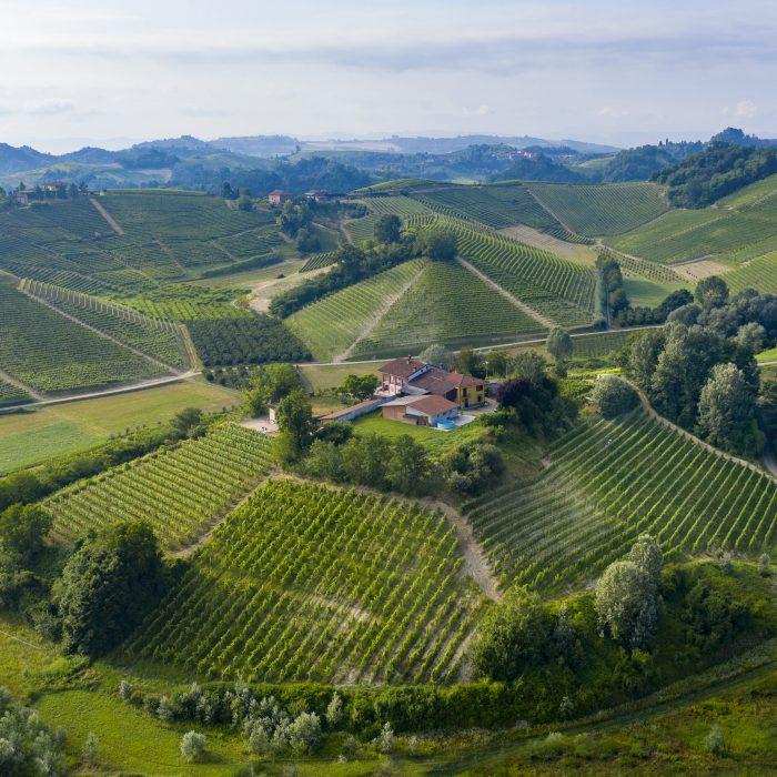 S. Anna vineyard