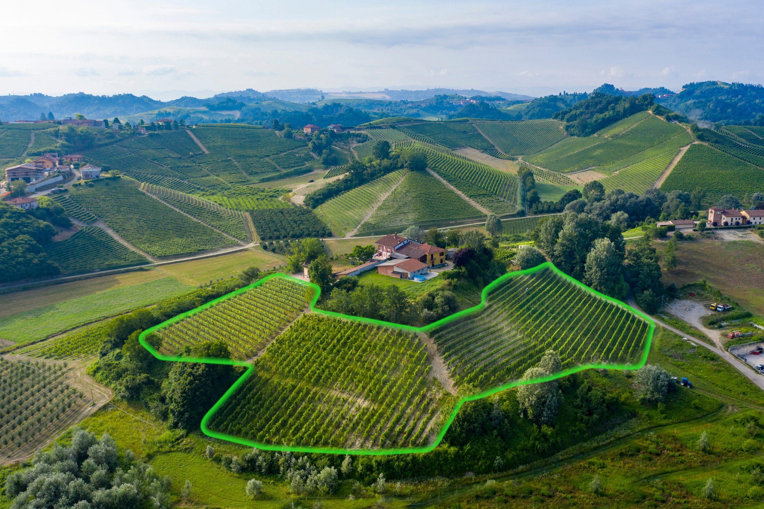 Highlighted Serra upini vineyard