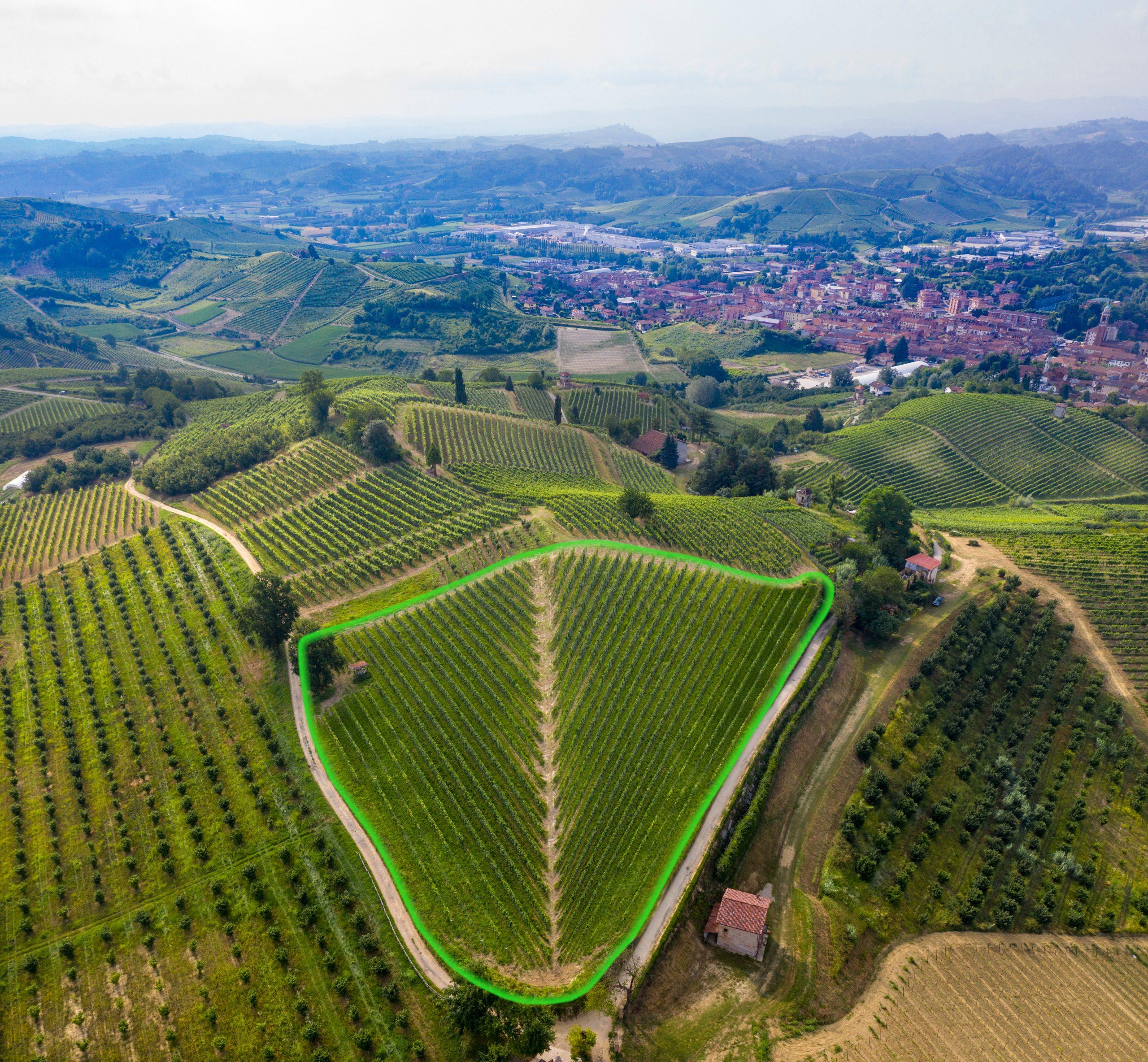 Highlighted Renesio vineyard