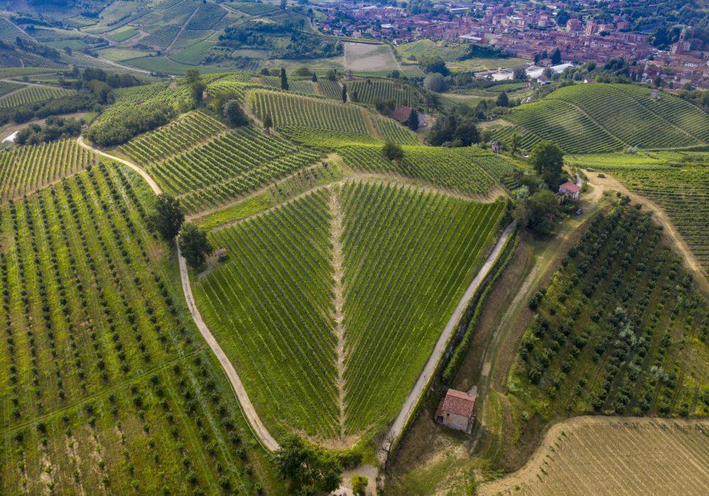 Renesio vineyard