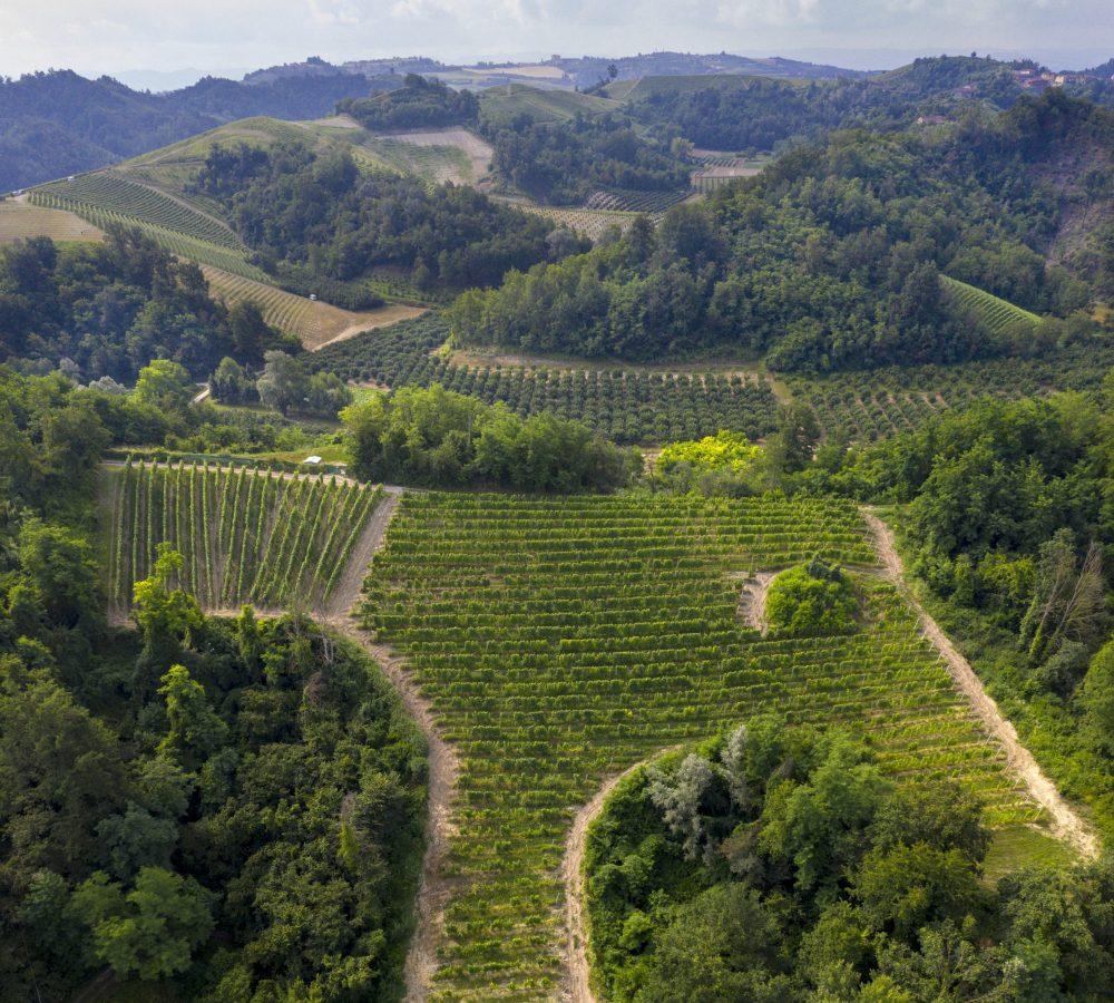 Tanone vineyard