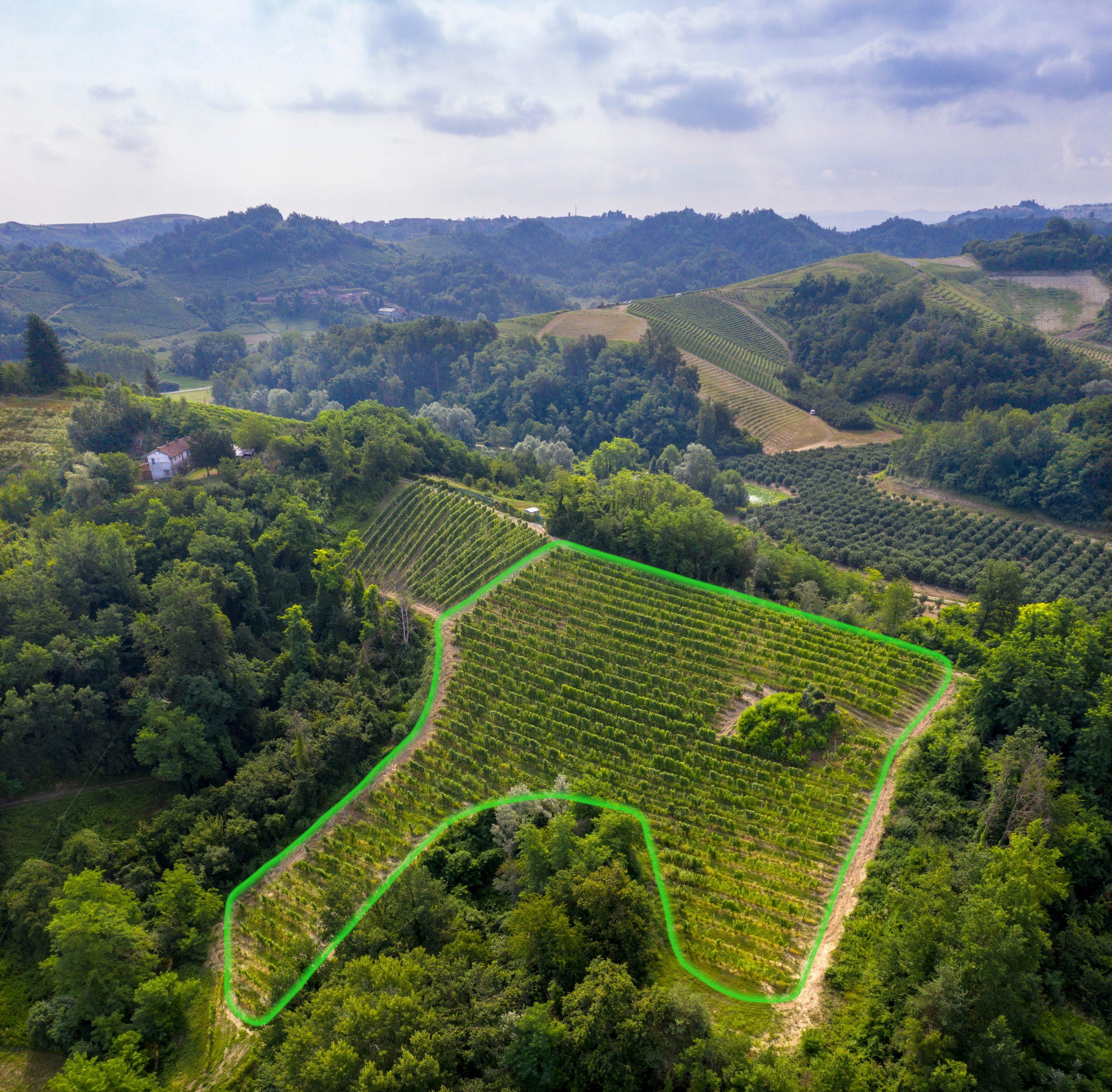 Highlighted Tanone vineyard