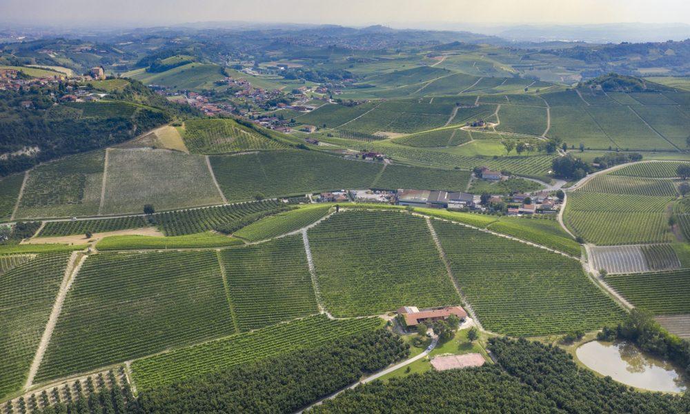 Pioiero vineyard