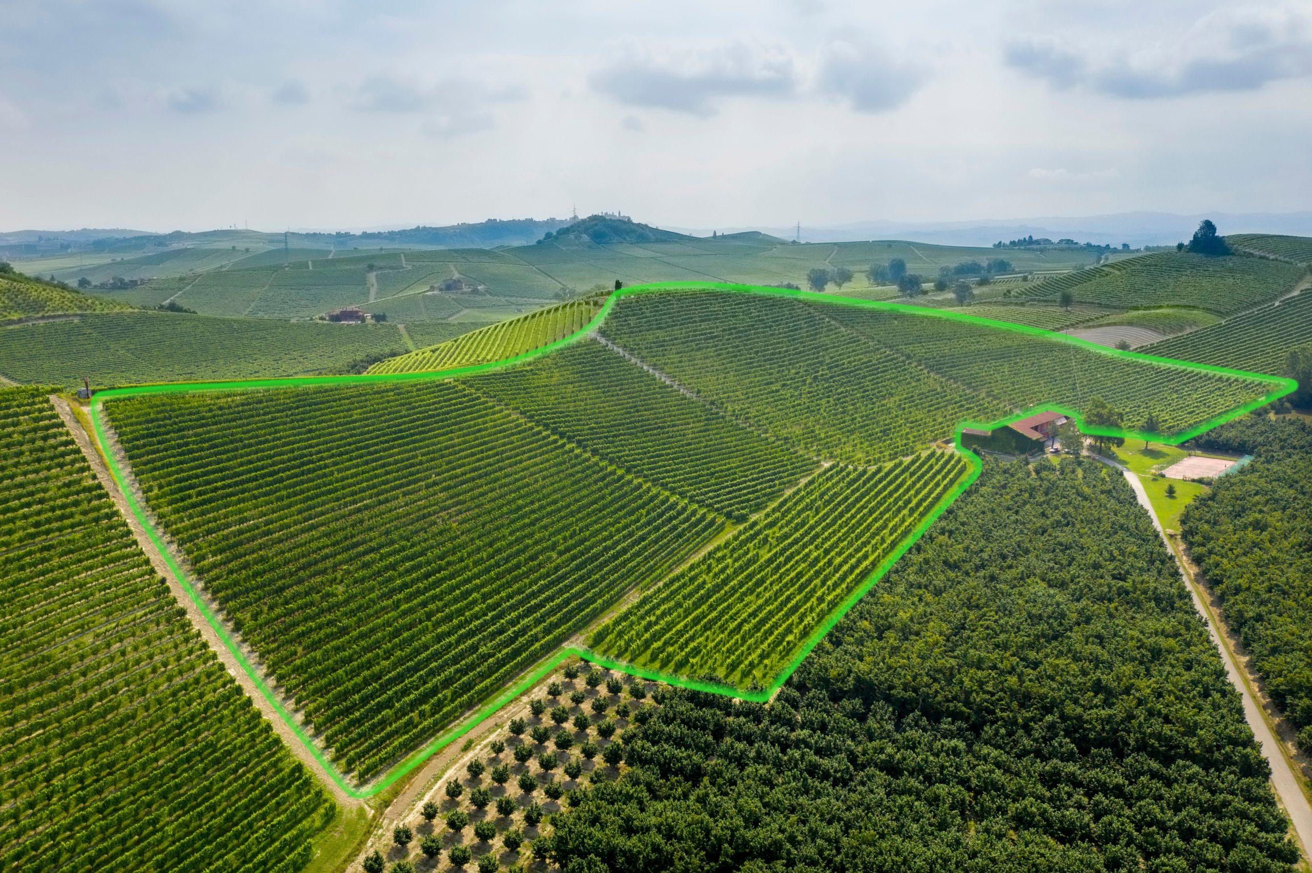 Highlighted Pioiero vineyard