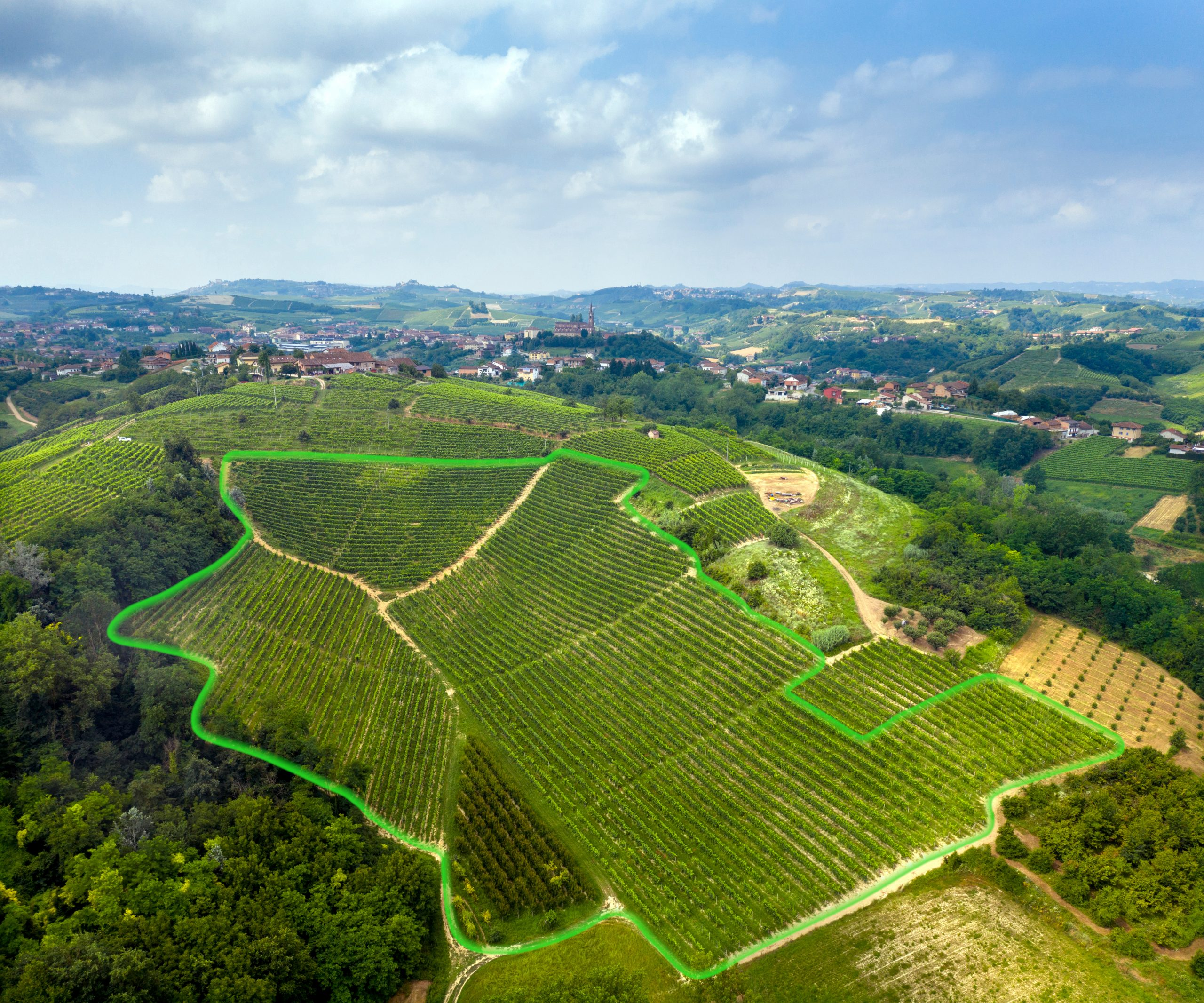 Highlighted Cascinotto vineyard
