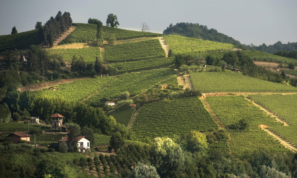 Renesio Incisa vineyard
