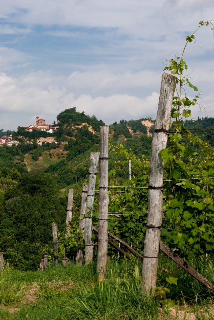 Rows of vines in Santo Stefano Roero